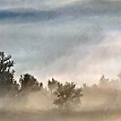 How Still the Fog by Barb Miller
