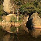 Tidal River rocks - sunrise reflection by Susie Walker