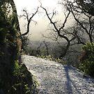 Walk this way... by Susie Walker