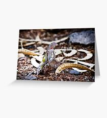 Zebra Tailed Lizard Greeting Card