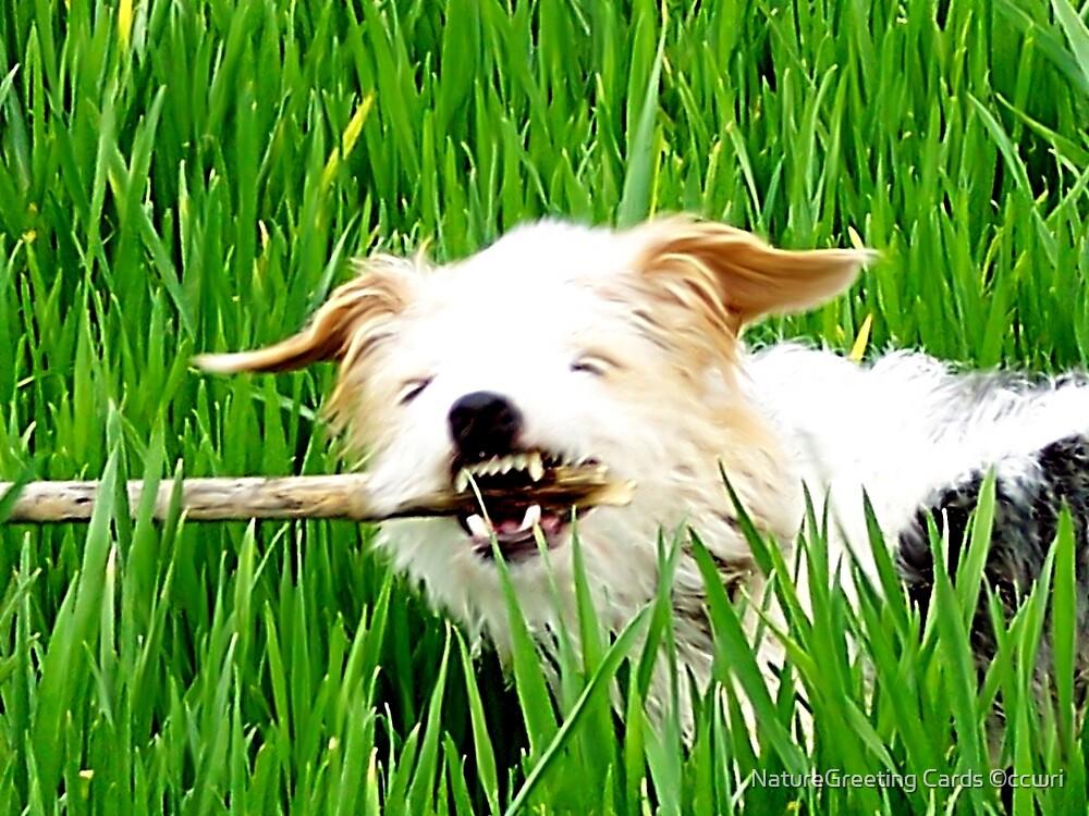 Killer Dog by NatureGreeting Cards ©ccwri