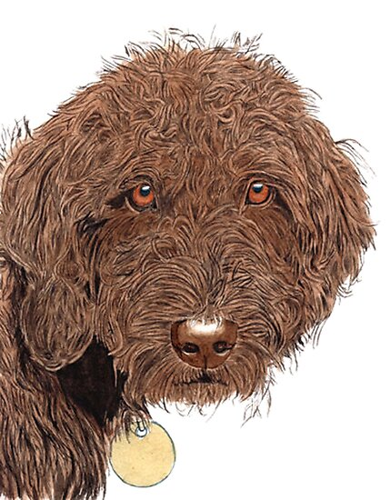 Chocolate Labradoodle by Yvonne Carter
