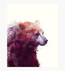 Bear // Calm Photographic Print