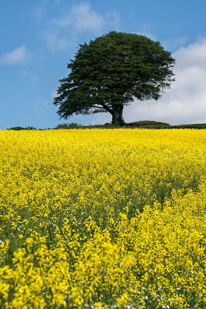 Sunshine Growing At The Roots Of A Tree by Michael Carter