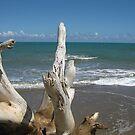 Beach: Natural Worn Tree by Jessica Snyder