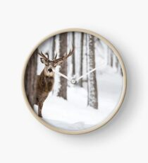 Red Deer Stag peeks cautiously Clock