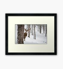Red Deer Stag peeks cautiously Framed Print