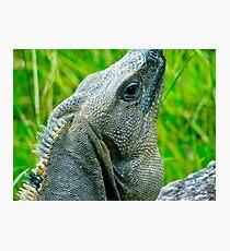 Iguana - Progreso Uxmal Mayan Ruins Photographic Print