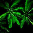 Palmz... by JAZ art