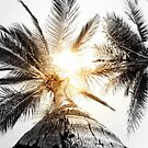 Coconuts anyone? by JAZ art