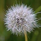 Make A Wish by TomRaven