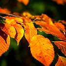 Autumn Leaves 2 by Robert Lynch