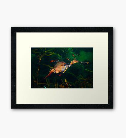 Weedy Weedy Framed Print