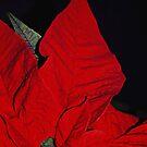 Crimson by Steve plowman