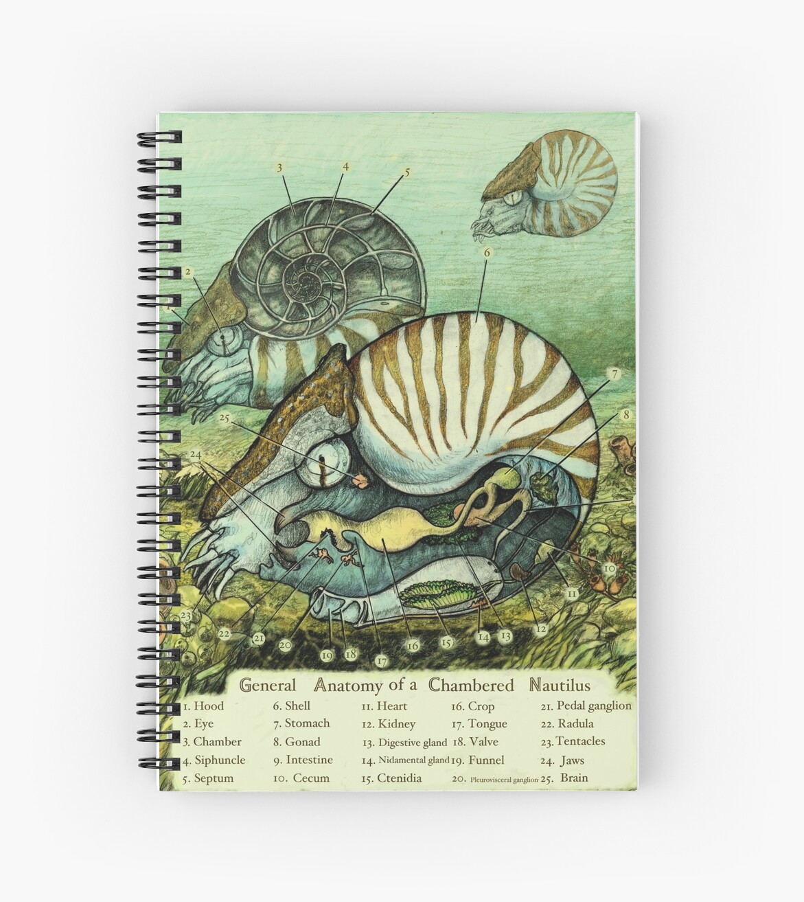 Nautilus Anatomy Spiral Notebooks By Rcaauwe Redbubble