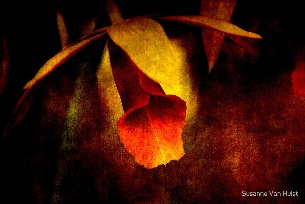 Full of Grace by Susanne Van Hulst