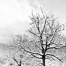 Snowing trees by by-jwp