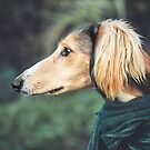 Saluki the Pet Dog by Patricia Jacobs DPAGB BPE4