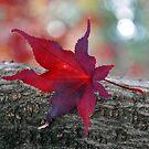 Rainbow Leaf by cebrfa
