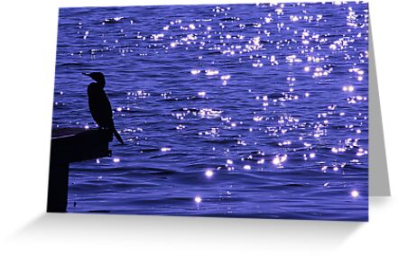 Stars on the water by Stefano  De Rosa