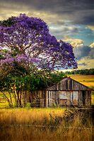 Jacaranda... by Tracie Louise