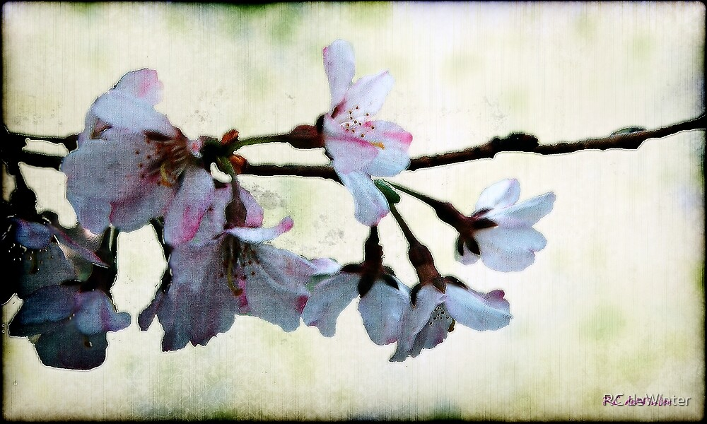 Scrap of Silk, Painted by RC deWinter
