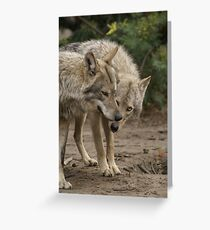 Rescued Timber Wolves 1 Greeting Card