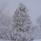 Frosty Pine by Moninne Hardie