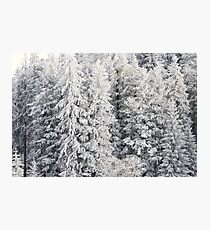 Winter Trees - Boedele, Austria Photographic Print