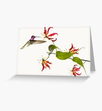 Colibri on tropical lily flower Greeting Card