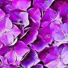 Fantasy Flowers by Lynne Morris
