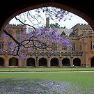 Sydney Uni pretty view to quadrangle by BronReid