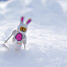 Snow Bunny by Dan Phelps