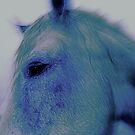 Horse Profile by Mario  Scattoloni