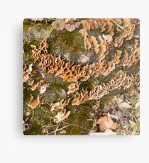 Bracket fungus Metal Print