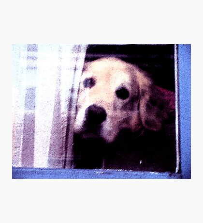 Lonely cute dog photography Photographic Print