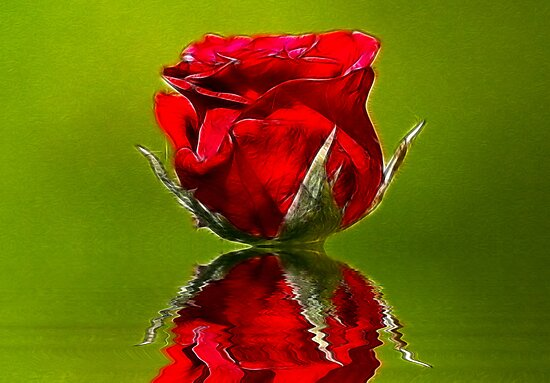 Red Rose #1 by Trevor Kersley