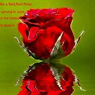 Red Red Rose #2 by Trevor Kersley