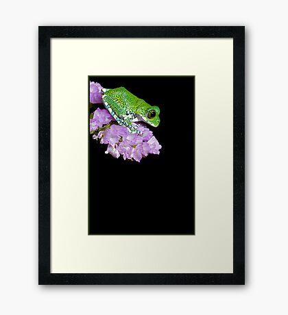 Peacock frog on pink flower Framed Print
