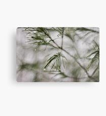 Precision/Evergreen Metal Print