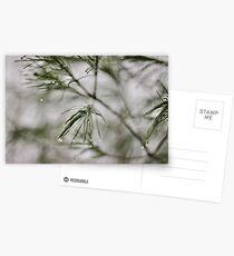 Precision/Evergreen Postcards