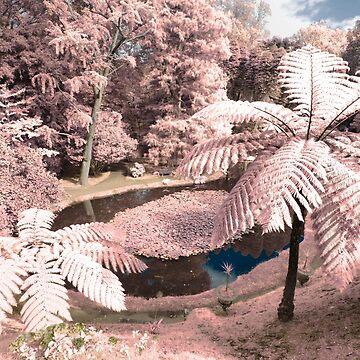 Tree ferns by gavila
