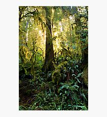 in the light of our elders Photographic Print