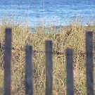 Beach Fence by DianaTaylor/ JacksonDunes