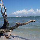 Bowman Beach, Sanibel Island by DianaTaylor/ JacksonDunes