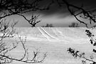 Trees Frame Trees BW by Andy Freer