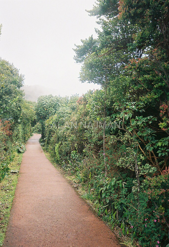 Path in Garden by ALAN NAJMAN