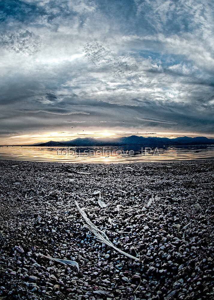 Feather on the Shore: Salton sea by toby snelgrove  IPA