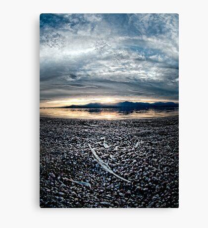 Feather on the Shore: Salton sea Canvas Print