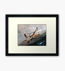 The Colors of A Grasshopper Framed Print
